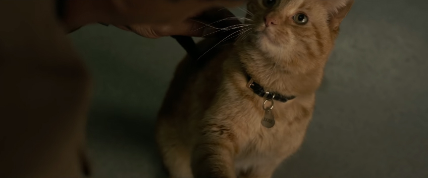 Capitã Marvel - Saiba o segredo escondido no gato da heroína!